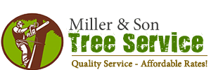 Miller Son Tree Service Tampa