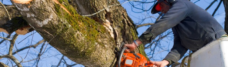 our tree services in tampa